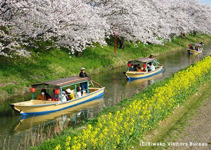 樱花的名胜景点分布