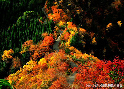 Autumn leaves floating on a cloud ocean